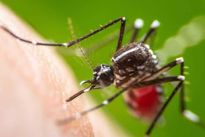 Dengue Fever outbreak 2020
