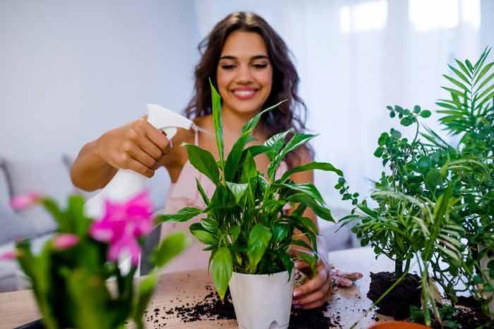 plants improve mood